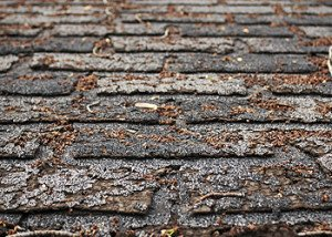 Missing or Broken Shingles cape cod