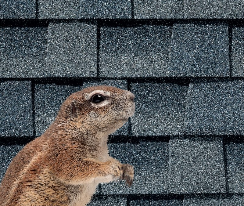Maintaining a Critter-Free Roof