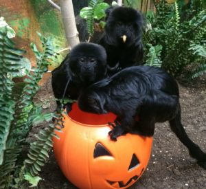 Boo at the Zoo Sponsor 2019